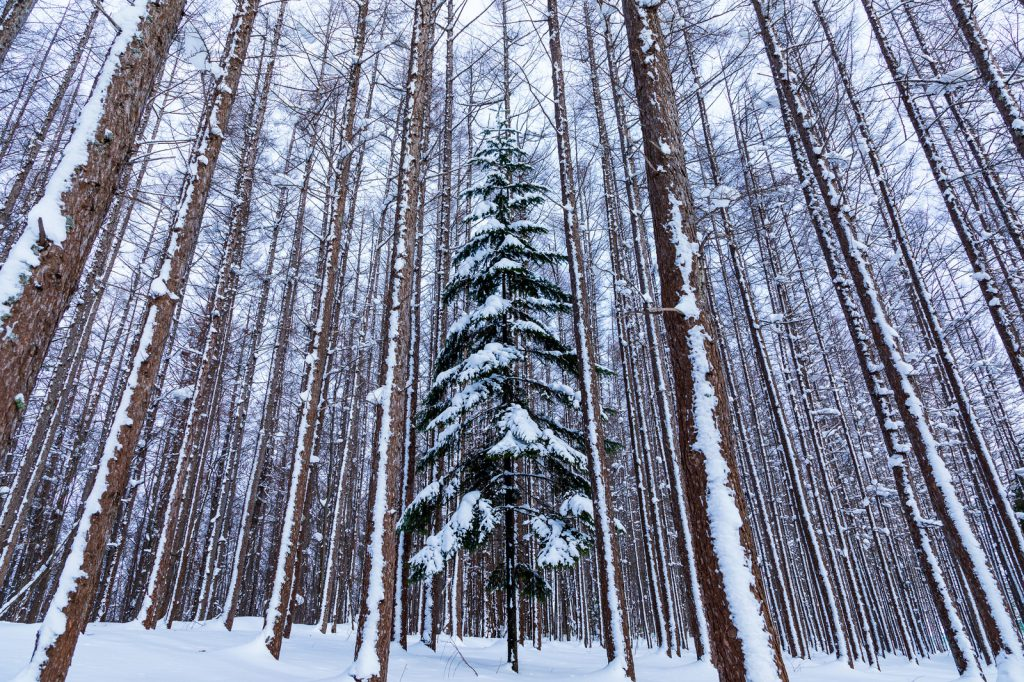 クリスマスツリーはなぜ飾る?のイメージ